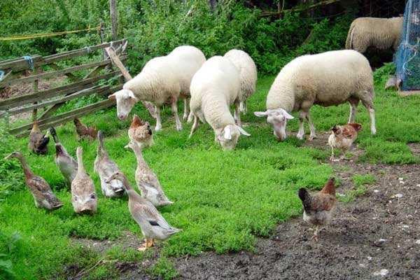 有机农业品牌定位应该突出新奇性么?