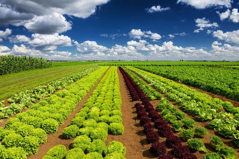 如何做好农业品牌策划?