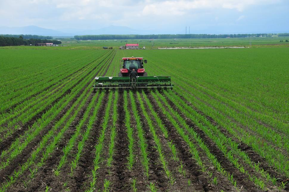 农业品牌策划重要吗?