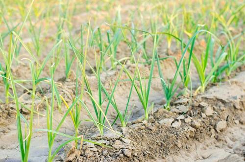农业欧宝体育APP下载策划公司哪家好?