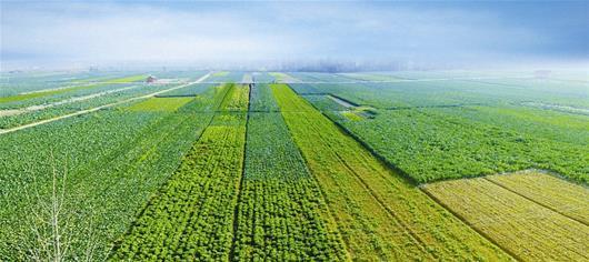 休闲农业营销策划该如何做?