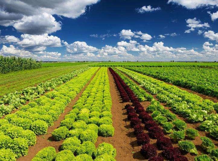 农业企业打造欧宝体育APP下载农业新方法