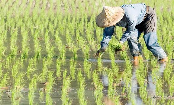 农业品牌战略规划,对业务成功的作用