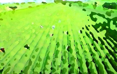 农业品牌提升机构,促进农业农村经济转型