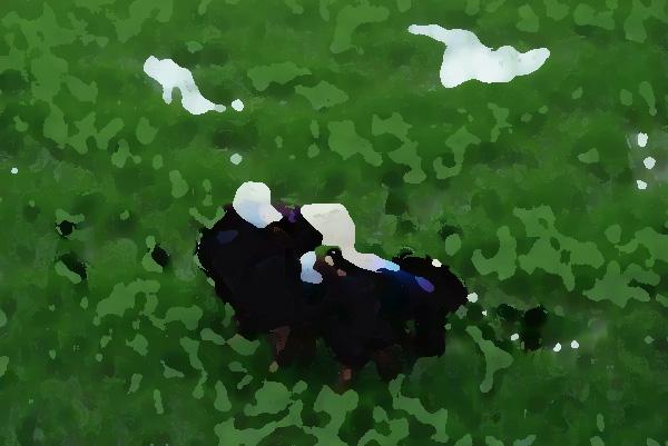 农业品牌形象提升机构,品牌强则农业强
