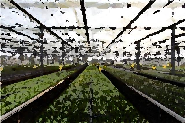 农业企业品牌提升 推进农业品牌工作
