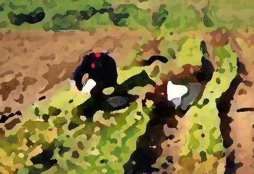 专业的农业全案规划所具备的原则