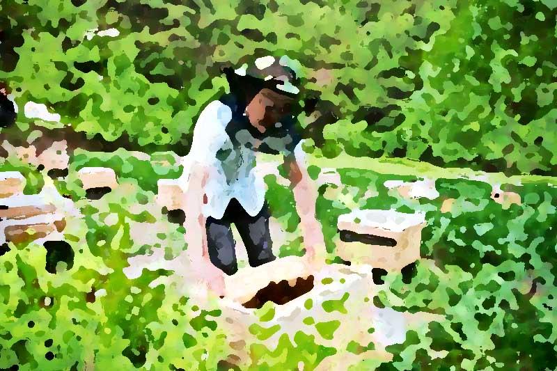专业的农产品全案策划企业所具备的三大因素