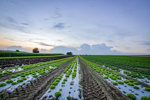 【营销策划】休闲农业营销策划该如何做?