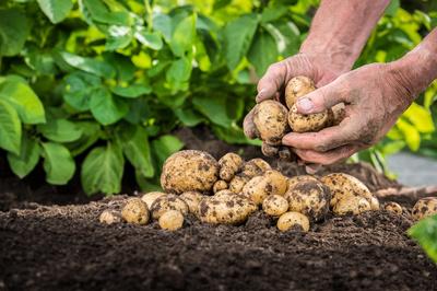 农业产品市场营销策划方案