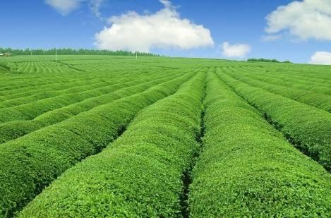 带着品牌种地,跟着品牌挣钱-农业品牌策划