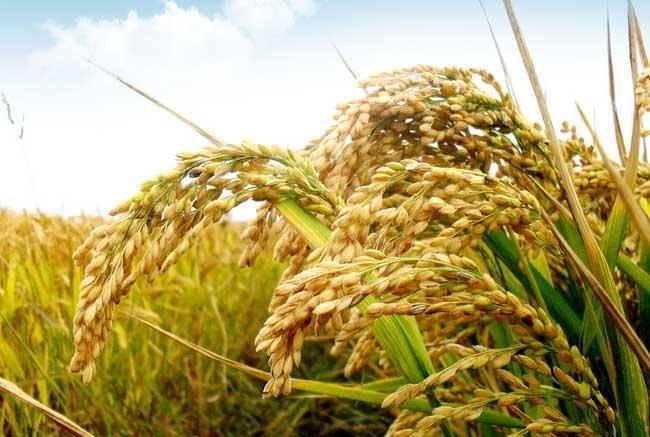 2021年粮食价格及补贴政策的农业问题