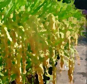 如何加强农业品牌建设